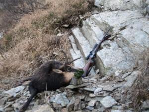 Gams jagd in Rumänien 2 (Small)